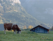 Colour Photos - In the Swiss country by Marcio Faustino