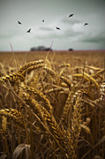 Ethiriel  Photography - In The WheatField