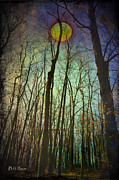 Forest At Night Prints - In the Woods at Night Print by Bill Cannon