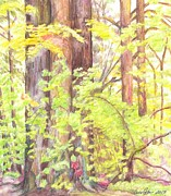 Works Drawings - In the Woods - Study by Cris Johnson