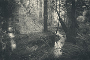 Creek Prints - In This Silence Print by Laurie Search