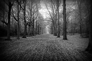 Path Art - In Your Darkest Hour by Photodream Art