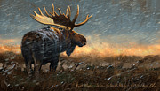 Moose Metal Prints - Incoming Metal Print by Aaron Blaise