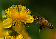 Dave Weth - Incoming Honey Bee