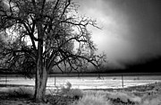 Winter Storm Framed Prints - Incoming Storm Framed Print by Cat Connor