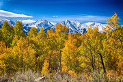 Autumn Prints Prints - Independence Pass Autumn View Print by James Bo Insogna