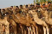 India Camel Band Print by Henry Kowalski