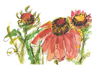 Indian Ink Prints - Indian Blanket Print by Kathleen McElwaine