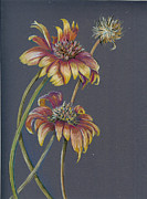 Blanket Drawings Prints - Indian Blanket Wildflower Print by Robin Coats