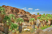 Grass - Indian Canyons View In Palm Springs by Ben and Raisa Gertsberg
