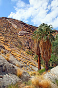 Grass - Indian Canyons View With Two Palms by Ben and Raisa Gertsberg