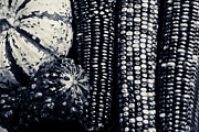 Bo Insogna Posters - Indian Corn and Squash in Black and White Poster by James Bo Insogna