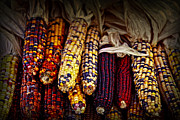 Fall Color Posters - Indian corn Poster by Elena Elisseeva