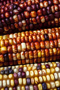 Seeds Art - Indian Corn Harvest Time by Garry Gay