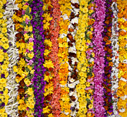 Garden Art Prints - Indian Flower Garlands  Print by Tim Gainey