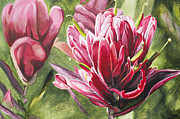 Macro Painting Framed Prints - Indian Paintbrush Framed Print by Aaron Spong