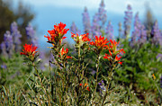 Haybales Art - Indian Paintbrush by Robert Bales