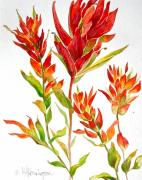 Canadian Indian Art Paintings - Indian Paintbrush by Virginia Ann Hemingson