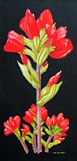 Carol Sabo - Indian Paintbrush Wild...