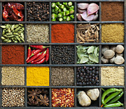 Spices Prints - Indian Spice Grid Print by Tim Gainey