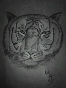 Ajay Vel - Indian Tiger