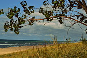 Indiana Dunes Photos - Indiana Dunes Fauna Beachscape by Amy Lucid