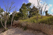 Indiana Dunes Photos - Indiana Dunes Landscapes by Amy Lucid