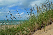 Indiana Dunes Framed Prints - Indiana Dunes Sea Oats Framed Print by Amy Lucid