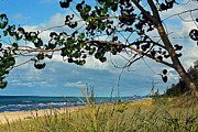 Indiana Dunes Photos - Indiana Dunes Tree Beachscape  by Amy Lucid