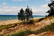 Indiana Dunes Framed Prints - Indiana Dunes Two Tree Beachscape Framed Print by Amy Lucid