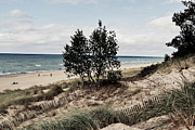 Indiana Dunes Prints - Indiana Dunes Two Trees Print by Amy Lucid