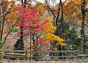 Indiana Trees Posters - Indiana Fall Color Poster by Alan Toepfer