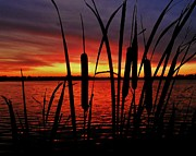 Cattails Photos - Indiana Sunset by Benjamin Yeager