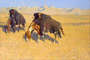 Western Western Art Prints - Indians Simulating Buffalo Print by Fredrick Remington
