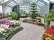 Judy Via-Wolff - Indoor Garden Delight