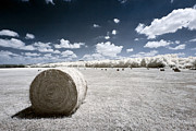 Infrared Bales Print by Scott Bean