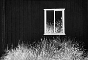 Sharon Beth - Infrared Barn