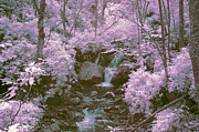 Ir Prints - Infrared mountain stream Print by Paul W Faust -  Impressions of Light