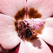 Macro Floral Photos Prints - Infrared Reproduction Print by John Rizzuto