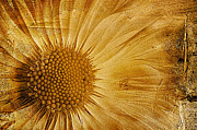 Texture Flower Prints - Infusion Print by John Edwards