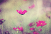 Pink Flower Prints Metal Prints - Ingrids Garden Metal Print by Amy Tyler