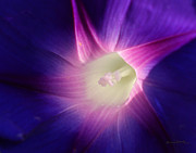 Morning Glory Art - Inner Glow by Ernie Echols