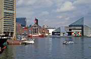Inner Harbor Baltimore Md Print by Gail Maloney