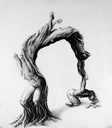 Stretching Drawings Prints - Inner Life of a Twisted Olive Tree Print by Mark Kopitzke