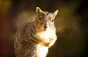 Marilyn Hunt - Inquisitive Squirell