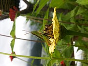 Smrita Pradhan - Insect Enjoying A Great...