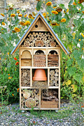 Ladybugs Photos - Insect Hotel by Olivier Le Queinec