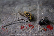 Dan Daulby - Insect Wars - Tragedy at...