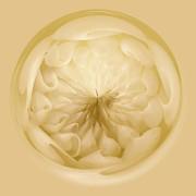 Inside A Sea Shell Orb Print by Thomas Photography  Thomas
