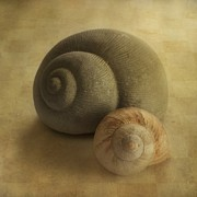 Snails Photos - Insieme by Priska Wettstein